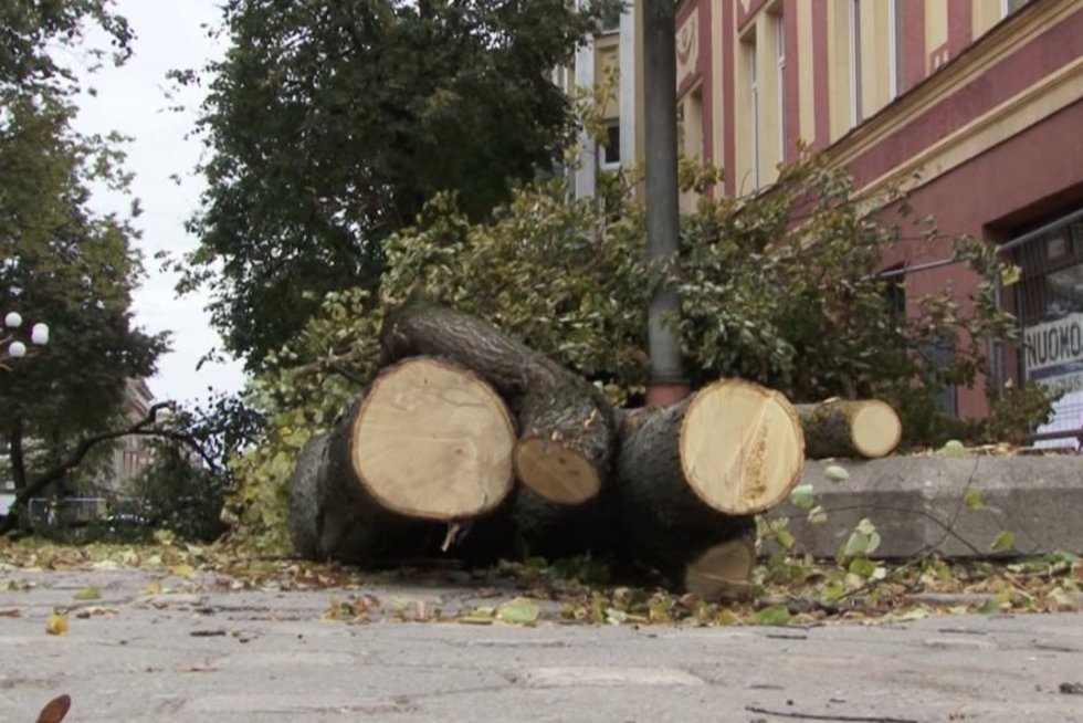 Medžiai (asociatyvi nuotr.) (nuotr. stop kadras)