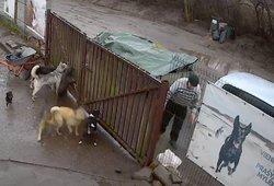 Vyras į prieglaudą Klaipėdoje esą atvežė mėsos gyvūnams: atvėrusios maišą darbuotojos vos nenualpo