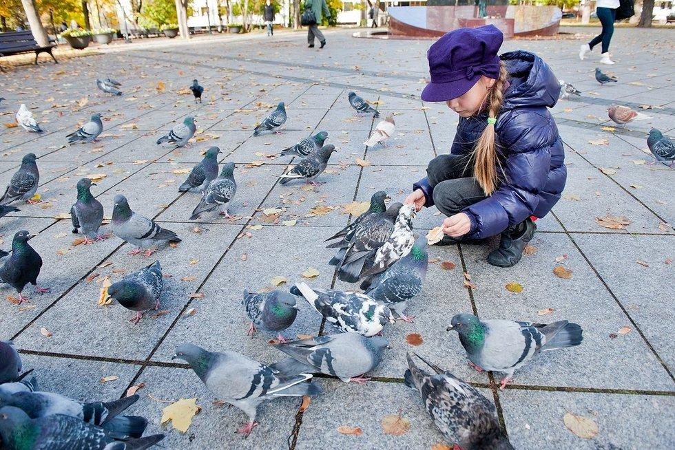 Paukščiai rudenį  (nuotr. Fotodiena.lt)