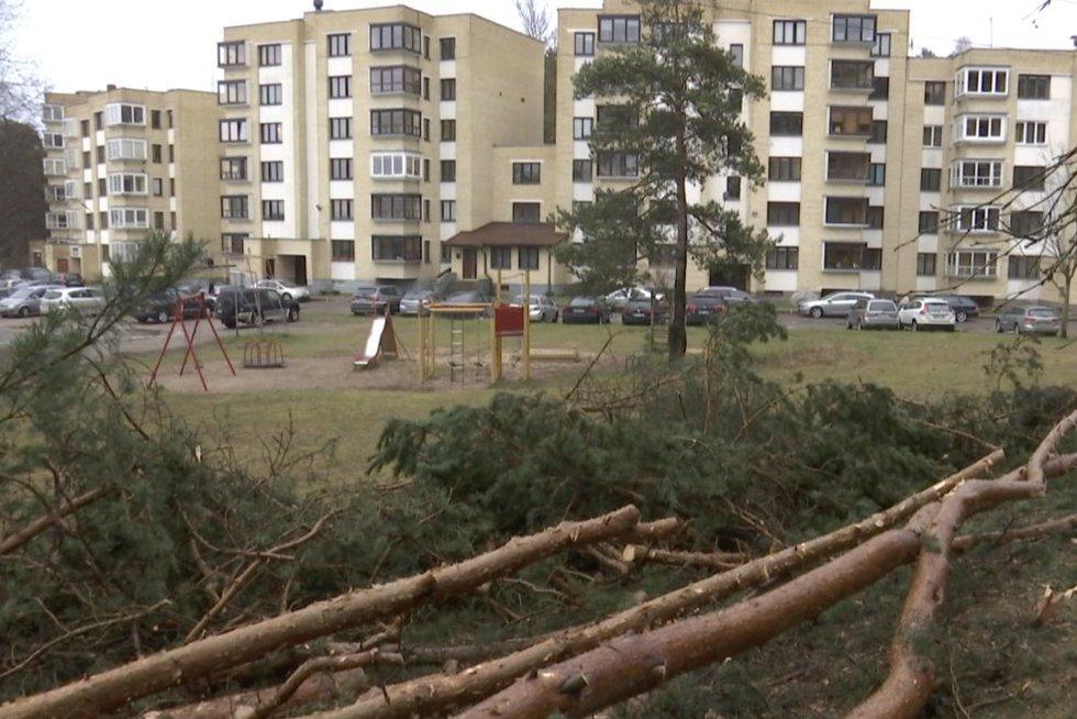 Sostinėje – naujas medžių pjovimo skandalas: savivaldybė turi paaiškinimą (nuotr. stop kadras)
