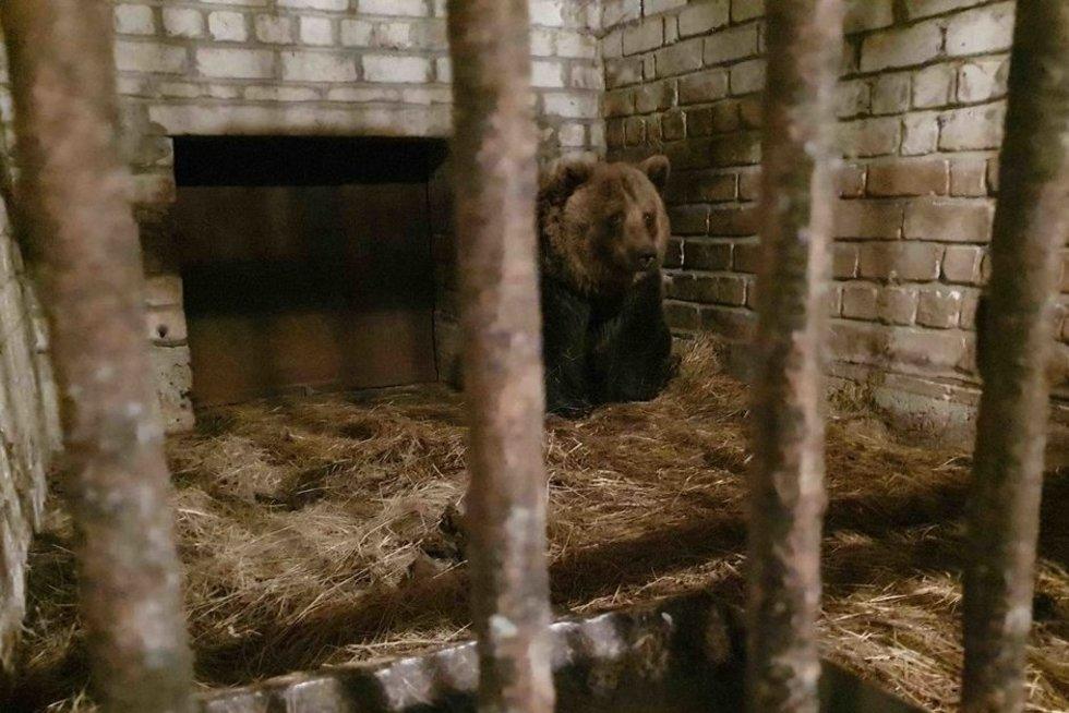 nuotr. VšĮ Lietuvos gyvūnų teisių apsaugos organizacija