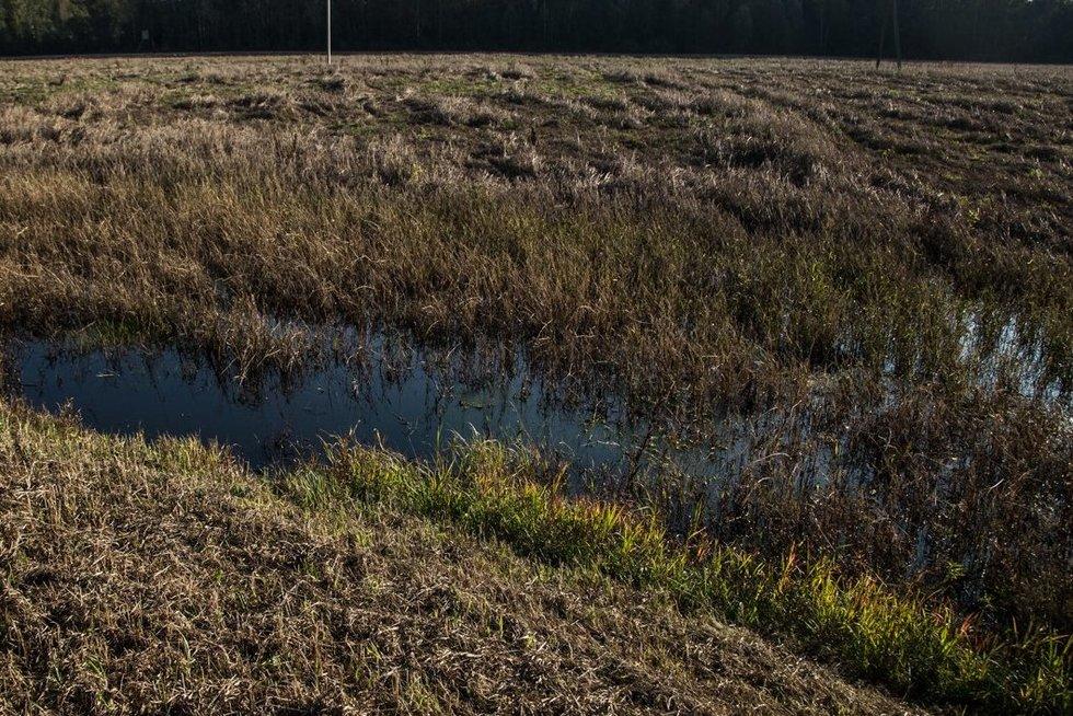 Premjeras S. Skvernelis apžiūrėjo užlietus laukus (nuotr. LRVK | Darius Janutis)