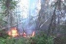 Gaisras miške (asociatyvi nuotr.) (nuotr. stop kadras)