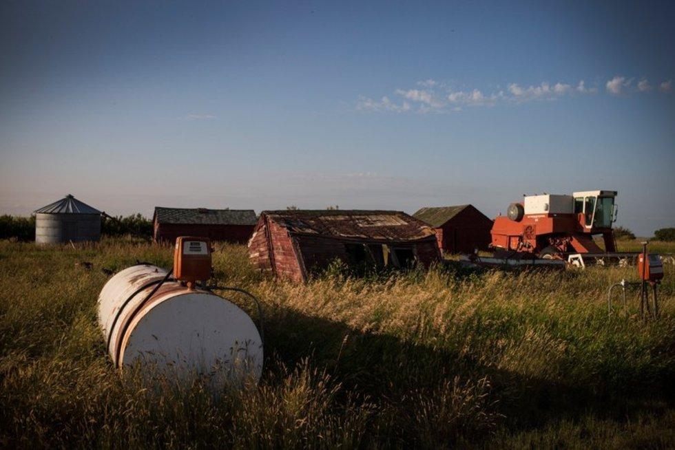 Žemės ūkis (nuotr. SCANPIX)