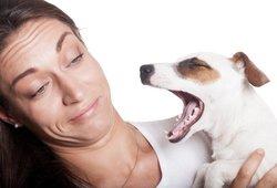 Blogas kvapas iš augintinio burnos: veterinarė įvardino priežastis