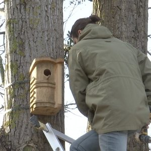 Kaunietis paukščiams sukūrė nepaprastus būstus