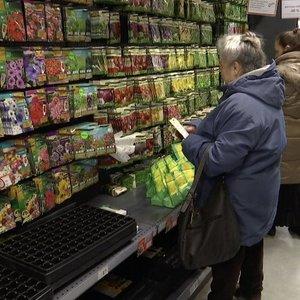 Prasidėjęs sodinimo sezonas plonina pinigines: žmonės skundžiasi sėklų kokybe
