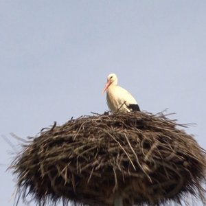 Lietuvoje pavasaris įsibėgėja: iš šiltų kraštų grįžta paukščiai