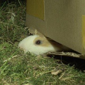 Kaune netoli miško kažkas vis atsikrato naminių gyvūnų