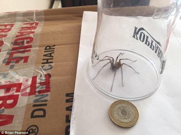 vorų antplūdis