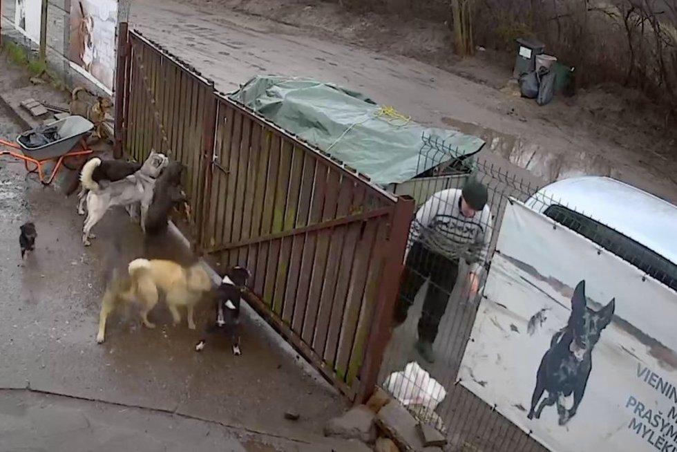 Vyras atvežė negyvus šunis (nuotr. stop kadras)