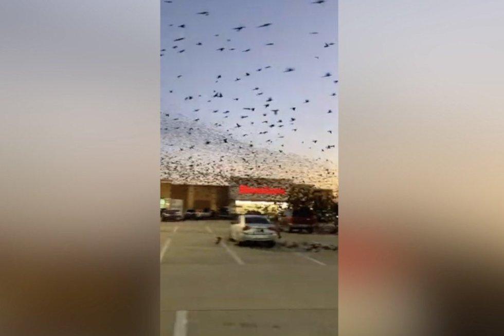 Paukščiai (nuotr. stop kadras)