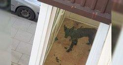 Klaipėdiečius sukrėtė vaizdas kaimynės balkone: neteko kantrybės