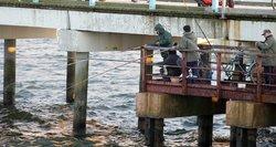 Žvejybos sezonas atidarytas – iš jūros traukia keistos išvaizdos laimikį