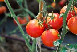 Trąšas augalams rasite tiesiog virtuvėje: rezultatai pranoks lūkesčius