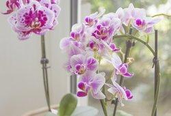 Palaistykite gėles šiomis natūraliomis trąšomis: jas rasite savo virtuvėje