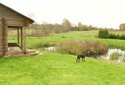 Žolės pjovimas vasarą: samdo ir emigrantai, o skundžia – kaimynai