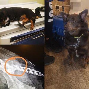 Poelgio Mažeikiuose atgarsiai: šuniukus pro langą sviedė dėl absurdiškos priežasties