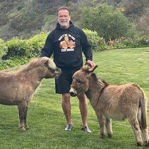 Schwarzeneggeriui karantinas tikrai neliūdnas: parodė, kaip treniruojasi su asilu