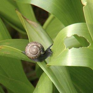 Sodininkai nebežino, ką daryti: neatsigina gausaus kenkėjų antplūdžio