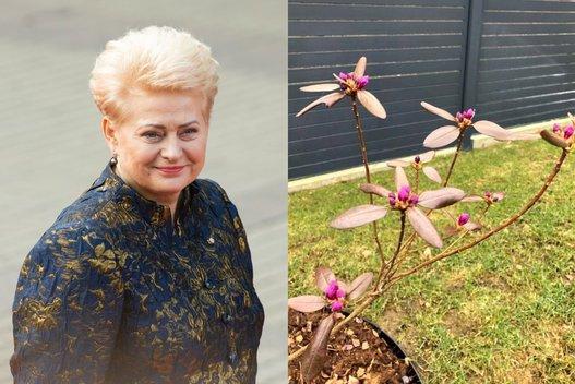 D. Grybauskaitė pasidalijo nuotraukomis iš savo kiemo (nuotr. facebook.com)