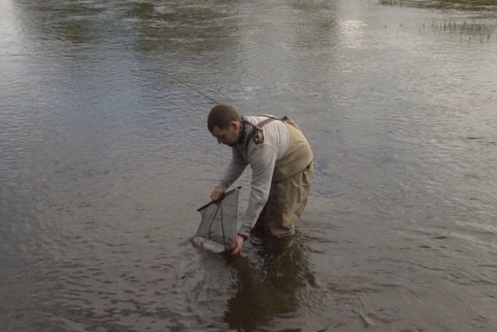 Žvejai į Šešupę suleido 2000 upėtakių: žvejoti gali visi, bet su viena sąlyga (nuotr. stop kadras)