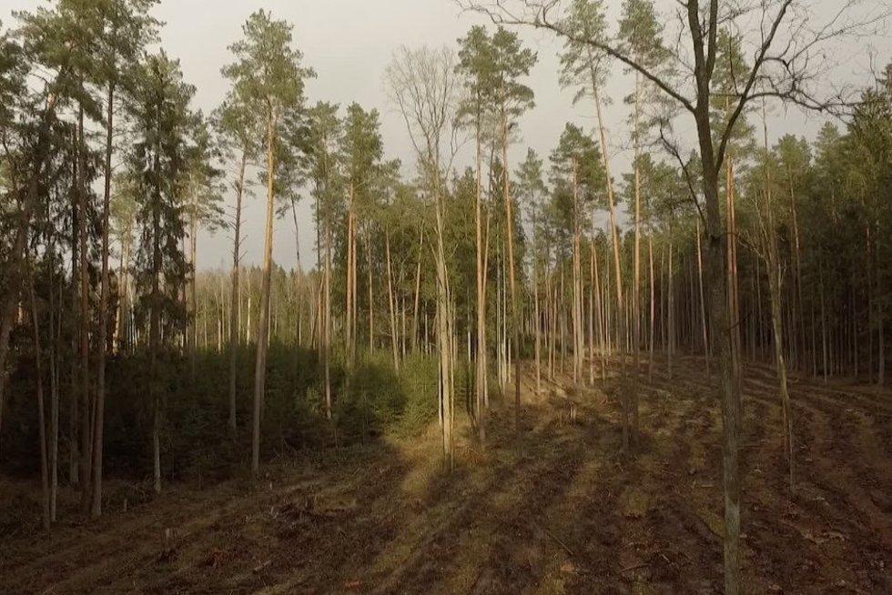 Visuomenininkai ir miškininkai su aplinkosaugininkais susipešė dėl Punios šilo (nuotr. stop kadras)