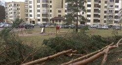Sostinėje – naujas medžių pjovimo skandalas: savivaldybė turi paaiškinimą