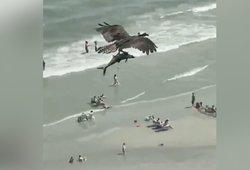 Paplūdimyje poilsiautojai negalėjo patikėti savo akimis – reginys užminė mįslę