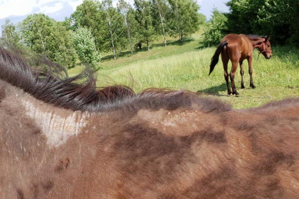 Ūkininko elgesys šiurpina Lietuvą: eksperimentai atneša mirtį (nuotr. tv3.lt)