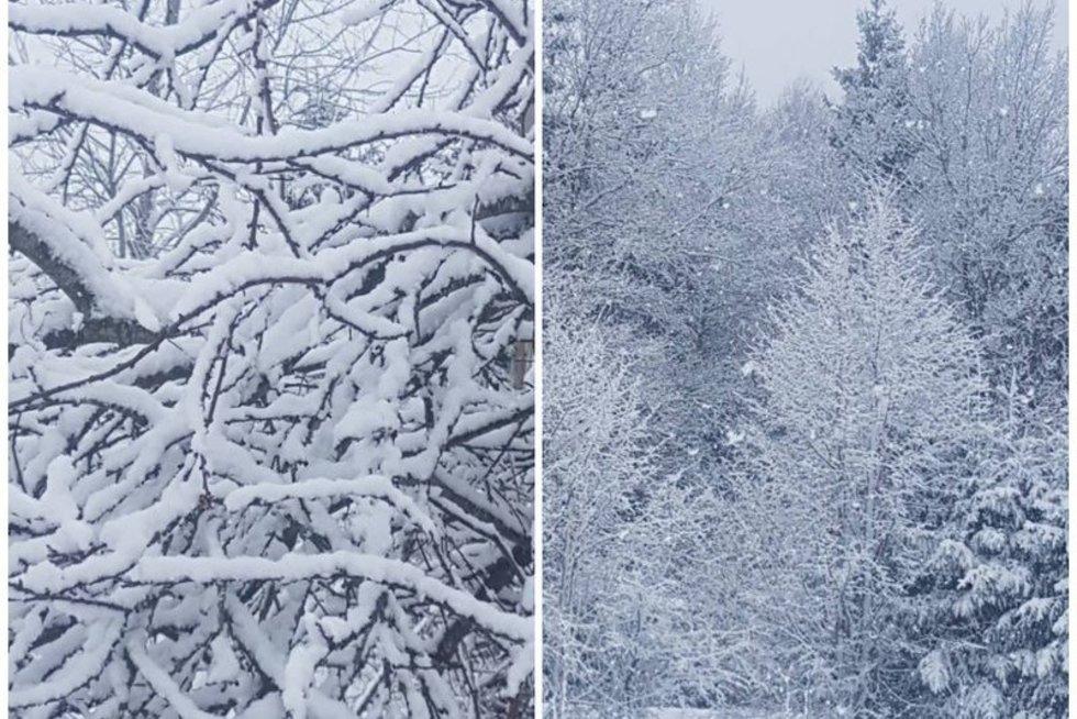 Žiema Lietuvoje (nuotr. skaitytojo)