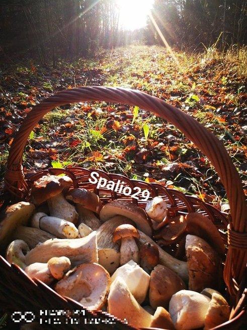 Grybautojos Gitos laimikis rastas spalio 29 dieną Mažeikių rajone (nuotr. facebook.com)