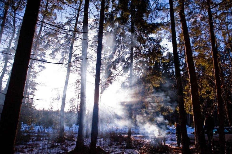 Miškas  (nuotr. Fotodiena.lt)