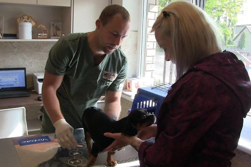 Nežmoniškas žiaurumas Mažeikiuose – buvęs kalinys iš 3 aukšto išmetė du šuniukus, norėjo išmesti vaiką (nuotr. TV3)