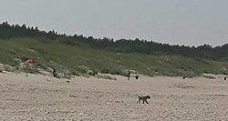 Paplūdimyje šuo užpuolė vaikus – gyvūno šeimininkas liko abejingas
