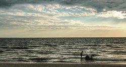 Poilsiautojai pyksta: į paplūdimį su šunimi draudžia, o jodinėti žirgu pajūryje leidžia
