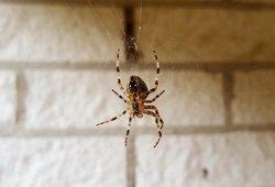 Pastatykite šį augalą savo namuose: vorų neliks nė kvapo