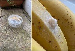 Radinys ant bananų pašiurpino moterį: vaizdą prisimins visą gyvenimą