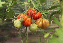 Pasisodinkite šiuos augalus savo darže: daržovių sulauksite dvigubai daugiau