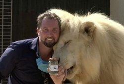 Sodininkai perka liūto išmatas – gelbėja nuo nelauktų svečių