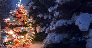 Kalėdos (nuotr. 123rf.com)