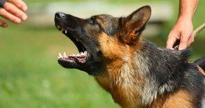 Agresyvus šuo. Asociatyvi nuotrauka (nuotr. 123rf.com)