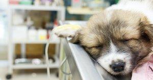 Šuo / asociatyvi (nuotr. 123rf.com)