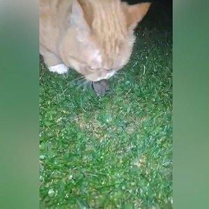 Vilnietė užfiksavo kuriozišką vaizdelį: tai miestiečiui katinui nutiko pirmą sykį