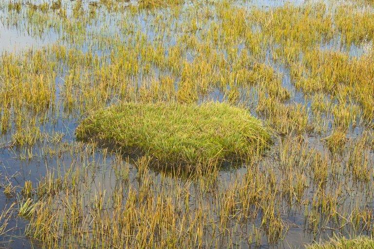 Sapropelis – kompleksinės organinės ir mineralinės nuosėdos, susiformavusios ežerų dugne iš augalinių ir gyvūninių organizmų liekanų (nuotr. 123rf.com)