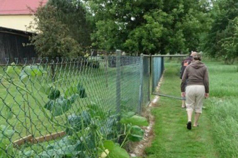Nuo visa kas žaliuoja naikinančių šliužų puolimo neapsaugo net ir druskos juostos, kurios rusniškiai sodriai paberia aplink tvoras.