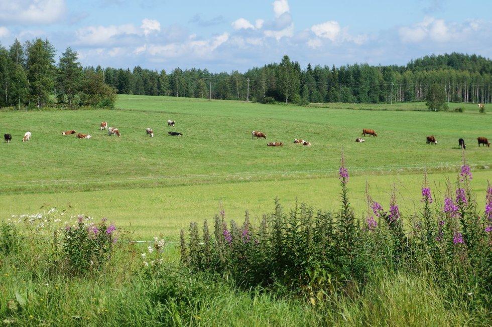 Aplinkai draugiškas ūkininkavimas (nuotr. Shutterstock.com)