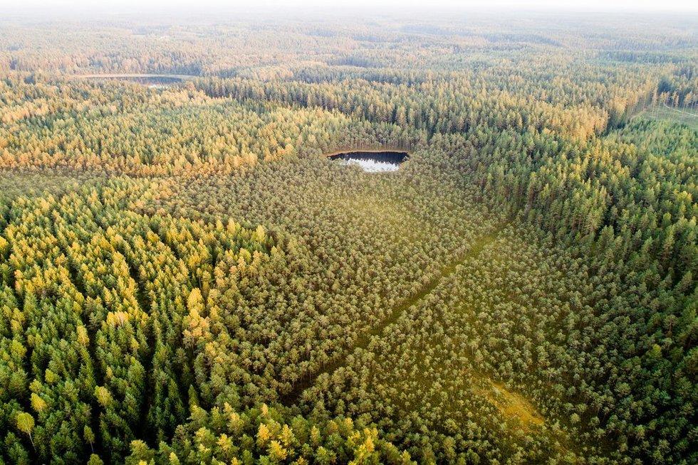 Labanoro giria (Irmantas Gelūnas/fotobankas.lt)