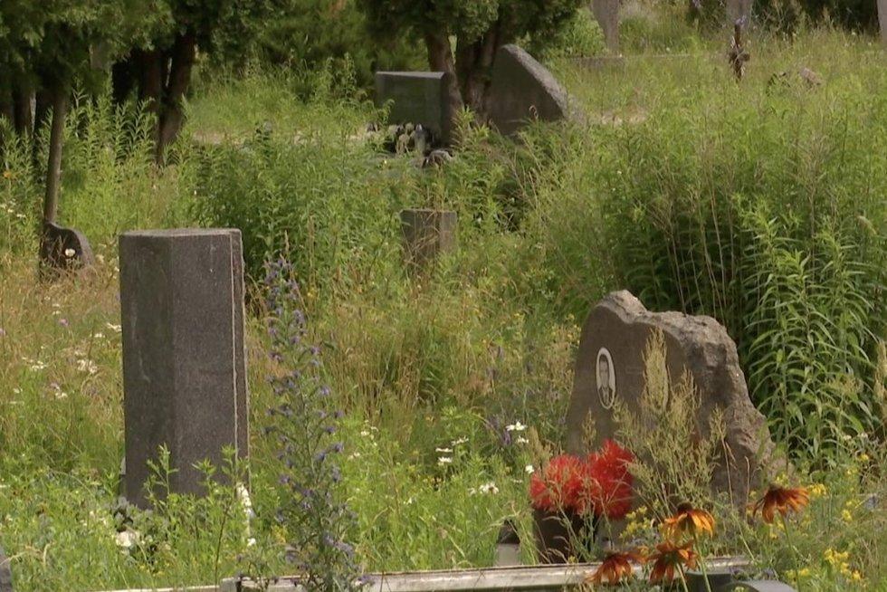 TV3 Žinios. Artimieji pasipiktinę: Vilniaus kapinėse žolės niekas nepjauna, nes niekas neprivalo (nuotr. stop kadras)