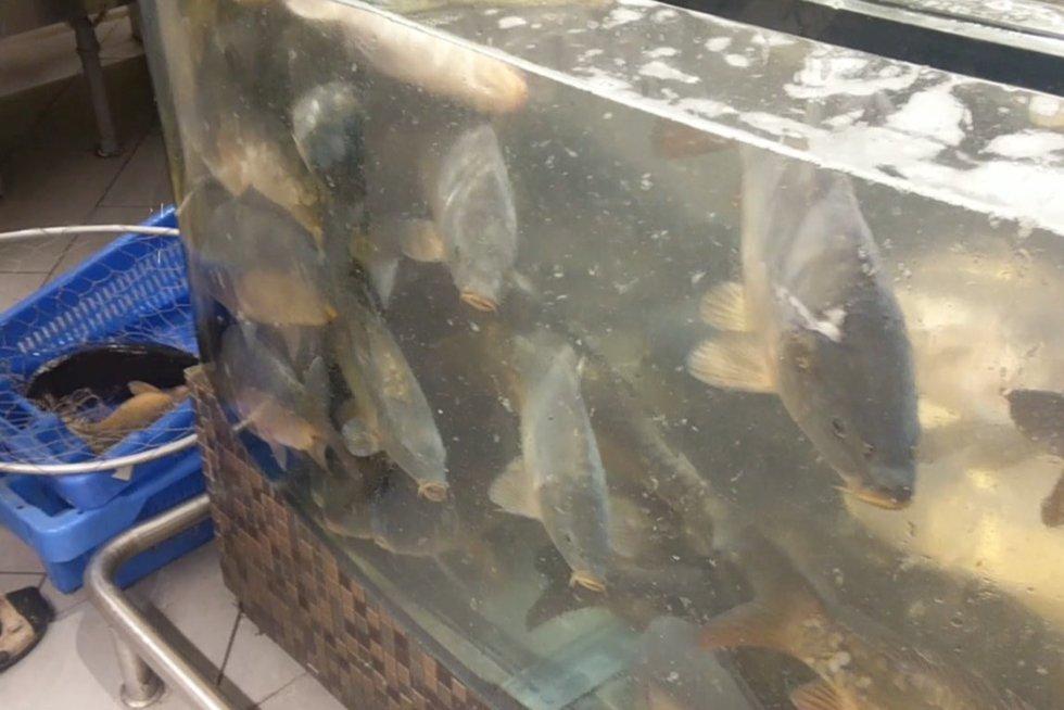 Gyvos žuvys parduotuvėje (nuotr. TV3)